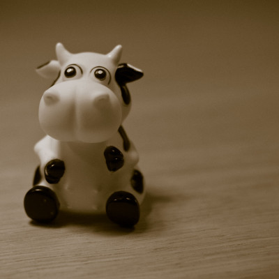 Mooing about
